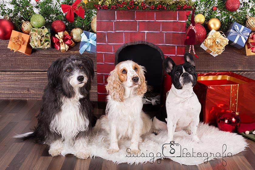 sesión fotográfica navideña mascotas salamanca